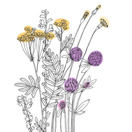 Vector schets van de wilde bloemen op een witte achtergrond.