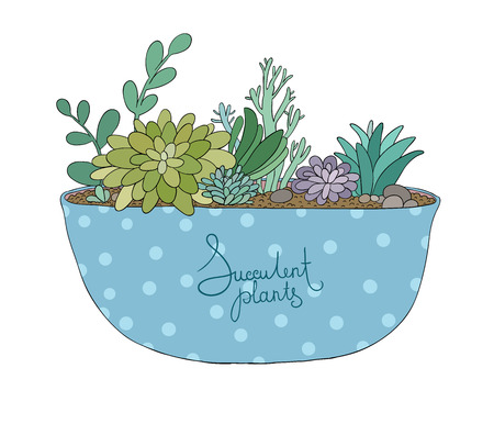 agave: Succulents in pot. Agave, aloe and cactus. Hand drawing isolated objects on white background. Vector illustration.