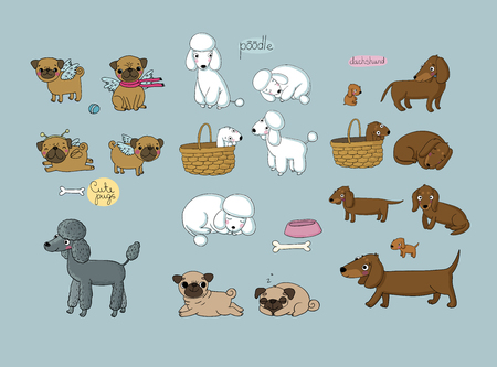 Cute cartoon pug, poodle and dachshund. Dogs and puppies. Funny animals - Vector illustration