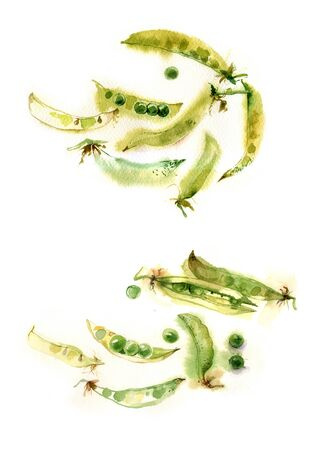 watercolor green peas on a white background - Illustration