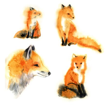Watercolor foxes collection. cute animals.happy zoo - Illustration