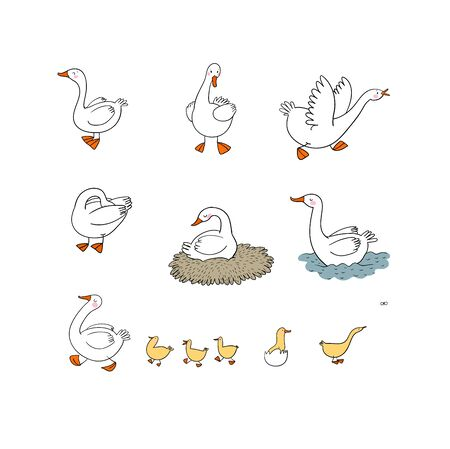 Set with Goose and ducks, nest and eggs. Farm animals. Vector