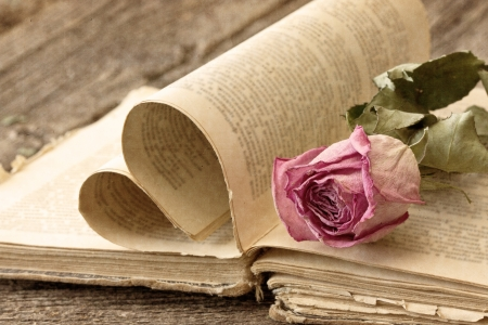 Dry rose on an old book in a vintage style photo