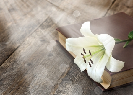 religious text: White Lily illuminated by the sun on a wooden  Stock Photo
