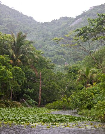 Tropical forest in rainy weather photo
