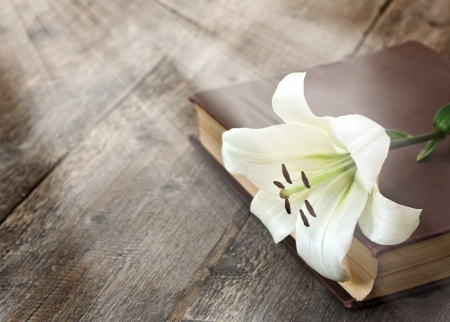 White Lily illuminated by the sun on a wooden  스톡 콘텐츠