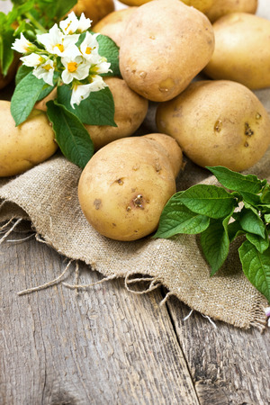 autumn harvest potatoes on wooden background  rustic style  Stock Photo