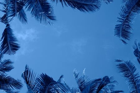 Color of the year 2020 - classic blue abstract background.  tropical background with palm trees