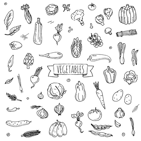Hand drawn doodle vegetables icons set Vector illustration seasonal vegetable symbols collection Cartoon different kinds of vegetables Various types of vegetables on white background Sketchy style