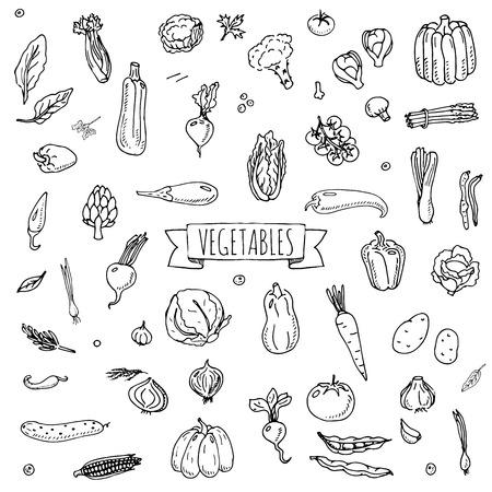 Hand getrokken doodle fruit pictogrammen instellen Vector illustratie seizoensgebonden groenten symbolen collectie Cartoon verschillende soorten groenten Verschillende soorten groenten op een witte achtergrond schetsmatige stijl