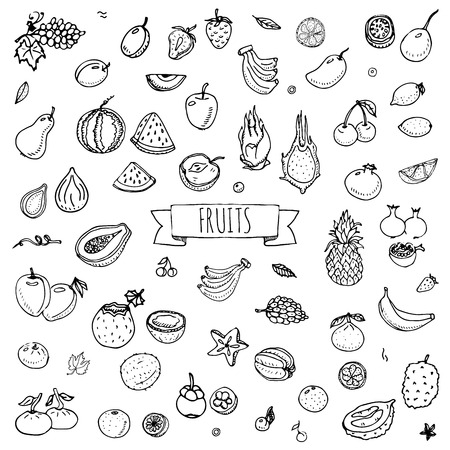 Hand drawn doodle fruits icons set Vector illustration seasonal fruits symbols collection Cartoon different kinds of fruits Various types of tropical fruits on white background Sketch style Fruit