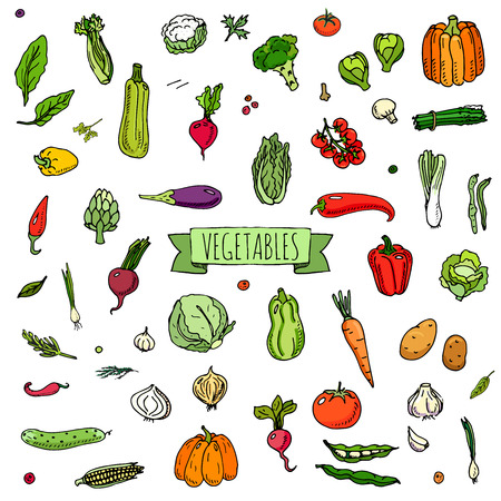 corne: Hand drawn doodle vegetables icons set Vector illustration seasonal vegetable symbols collection Cartoon different kinds of vegetables Various types of vegetables on white background Sketchy style