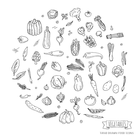 Hand drawn doodle seasonal vegetables icons set. Vector illustration. Carton food symbols collection. Isolated on white background. Sketchy style: tomato, potato, cabbage, squash, pepper, corn, carrot Zdjęcie Seryjne - 74829461