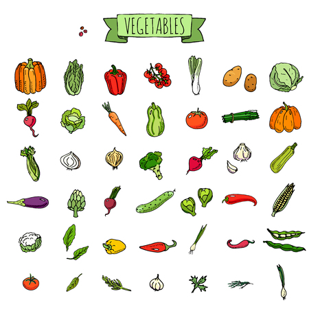 Hand drawn doodle vegetables icons set Vector illustration seasonal veggies symbols collection Cartoon different kinds of vegetables Various types on white background Sketchy style Ilustracja