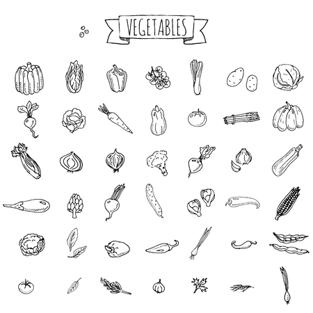 Hand drawn doodle vegetables icons set Vector illustration seasonal veggies symbols collection Cartoon different kinds of vegetables Various types on white background Sketchy style Ilustrace