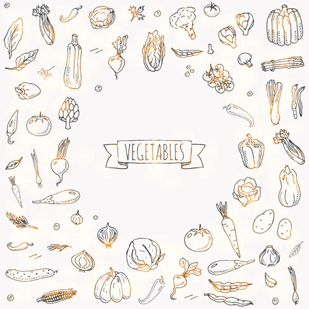 Hand drawn doodle vegetables icons set Vector illustration seasonal vegetable symbols collection Cartoon different kinds of vegetables Various types of vegetables on white background Sketchy style 스톡 콘텐츠 - 100314307