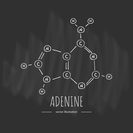 Hand drawn doodle Adenine chemical formula icon Vector illustration nitrogenous base symbol Cartoon sketch genome element DNA component on chalkboard background Carbon Atom Nitrogen Molecule Bond Illustration
