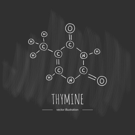 Hand drawn doodle Thymine chemical formula icon Vector illustration nitrogenous base symbol Cartoon sketch genome element DNA component on chalkboard background Carbon Atom Nitrogen Molecule Bond