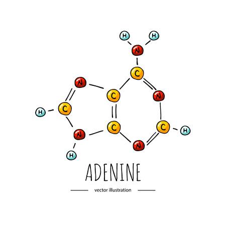 Icona di formula chimica adenina doodle disegnato a mano Simbolo di base azotata illustrazione vettoriale Elemento del genoma di schizzo del fumetto Componente del DNA su sfondo bianco Atomo di carbonio azoto molecola legame ossigeno
