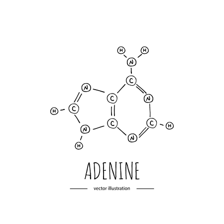 Hand drawn doodle Adenine chemical formula icon Vector illustration nitrogenous base symbol Cartoon sketch genome element DNA component on white background Carbon Atom Nitrogen Molecule Bond Oxygen