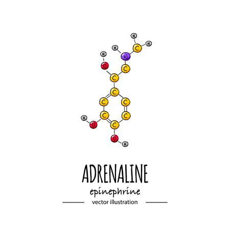 Dibujado a mano doodle Icono de fórmula química de adrenalina Ilustración de vector Molécula de dibujos animados Bosquejo Símbolo de epinefrina Estructura molecular Fórmula de hormona científica estructural aislada sobre fondo blanco
