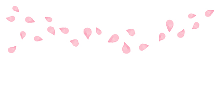 Light pink flying petals isolated on white background. Sakura Roses petals.