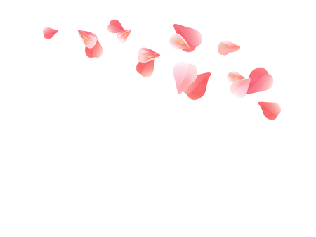 Pink flying petals isolated on white. Vectores