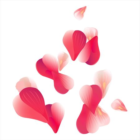 Pink Red flying petals isolated on white background. Sakura Roses petals. Vector EPS 10 cmyk Illustration