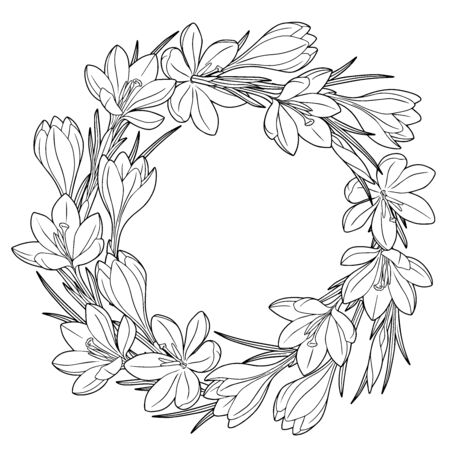 Frame with black and white spring flowers crocuses. Coloring book for adults for relaxation and meditation. Vector isolated elements Vettoriali