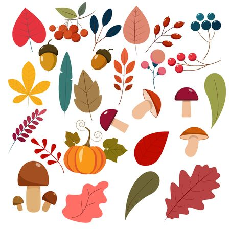 Set of autunm leaves, berries, mushrooms, pumpkin. Flat cartoon elements for your design. Vektoros illusztráció
