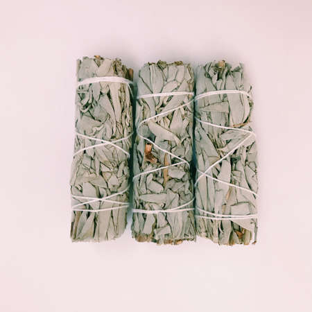 Natural incense White Sage. Sacred tree of South America, color square photo.White Sage on white background. Stock Photo
