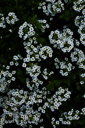 small daisies on a natural background, soft focus wallpaper