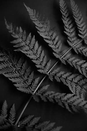 stylish black and white photo of a forest fern
