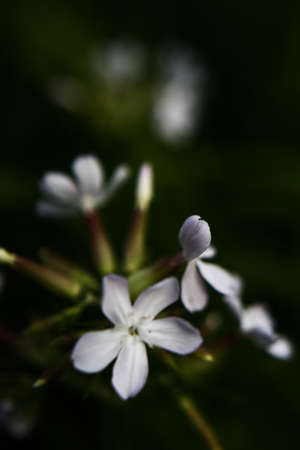 white flowers on a dark background, summer gloomy vegetable background with soft camera focus