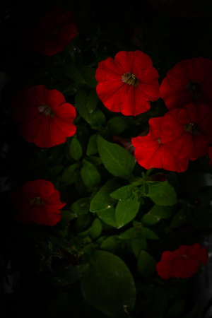 summer floral pattern of red plants, soft focus background