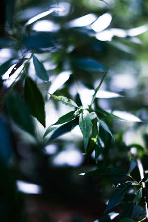 summer leaf background, beautiful green forest leaves, soft focus