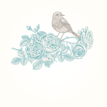 robin bird: Vector vintage background with roses and birds. Illustration