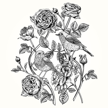 rose bush: vintage card with roses and birds. Illustration