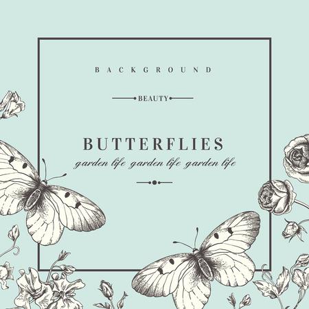lijntekening: Zomer achtergrond met bloemen en vlinders. Vector illustratie. Acidanthera bloemen. Stock Illustratie