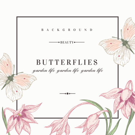 Summer background with flowers and butterflies. Vector illustration. Acidanthera flowers.
