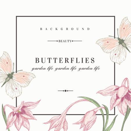 Zomer achtergrond met bloemen en vlinders. Vector illustratie. Acidanthera bloemen. Stock Illustratie