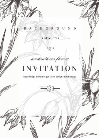 jardines flores: Plantilla de invitaci�n de boda con las flores. Blanco y negro. Flores Acidanthera. Ilustraci�n del vector.