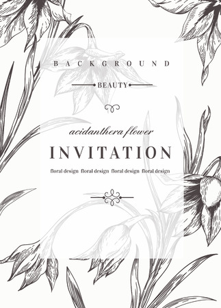flower borders: Wedding invitation template with flowers. Black and white. Acidanthera flowers. Vector illustration. Illustration