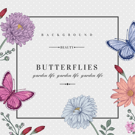 aster: Vector card with two butterflies and flowers in pastel colors. Romantic summer background. Aster chrysanthemum daisy.