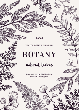 eucalyptus: Botanical illustration with leaves. Boxwood, seeded eucalyptus, fern, maidenhair. Engraving style. Design elements. Black and white.