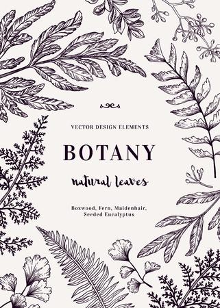 Ejemplo botánico con las hojas. Boj, eucalipto, helecho, culantrillo. el estilo de grabado. Elementos de diseño. En blanco y negro. Ilustración de vector