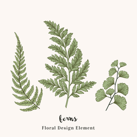 Set with ferns. Plants with leaves isolated on white background.