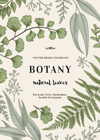 Floral background. Vintage invitation with various leaves. Botanical illustration. Fern, seeded eucalyptus, maidenhair. Engraving style. Design elements.