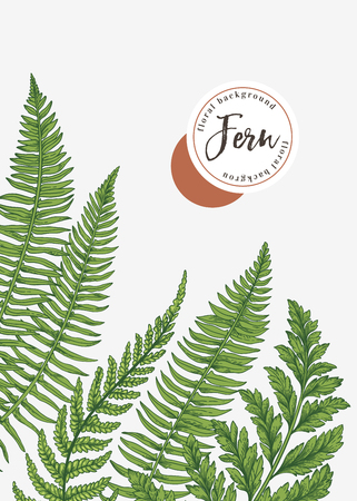 background with leaves of fern.