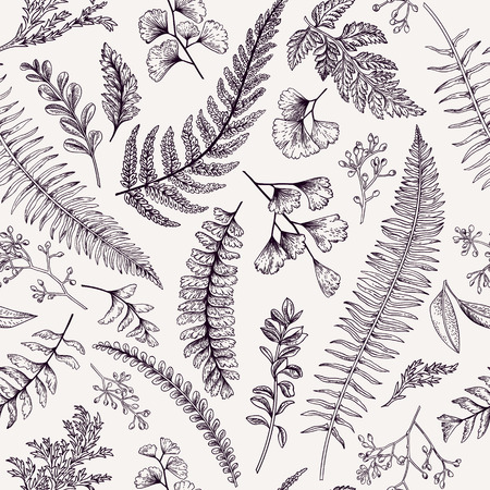 botanical drawing: Seamless floral pattern in vintage style. Leaves and herbs. Botanical illustration. Boxwood, seeded eucalyptus, fern, maidenhair.